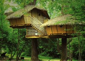 гостиницы на дереве
