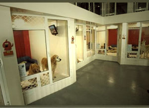гостиница с животными